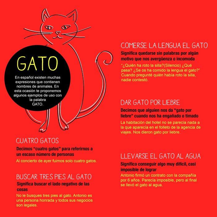 Expresiones en español con la palabra gato